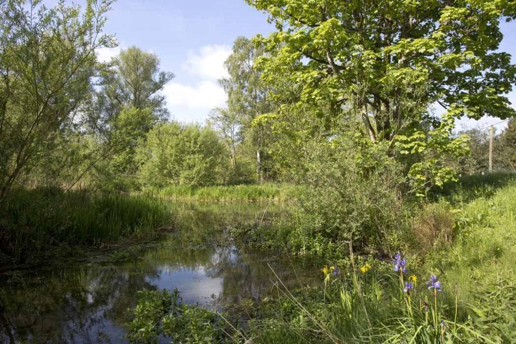 River Leach - Eastleach