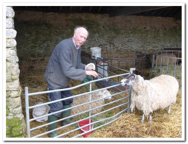 Martin Squire - Eastleach- Dad tending his ewes at lambing